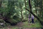 Rietumgruzijas jeb Adžārijas kalnu mežu izskatu ietekmējis turienes subtropiskais klimats. Tajos aug daudz mūžzaļu koku un krūmu 6