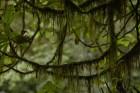 ...bet koku zari noauguši sūnām 8