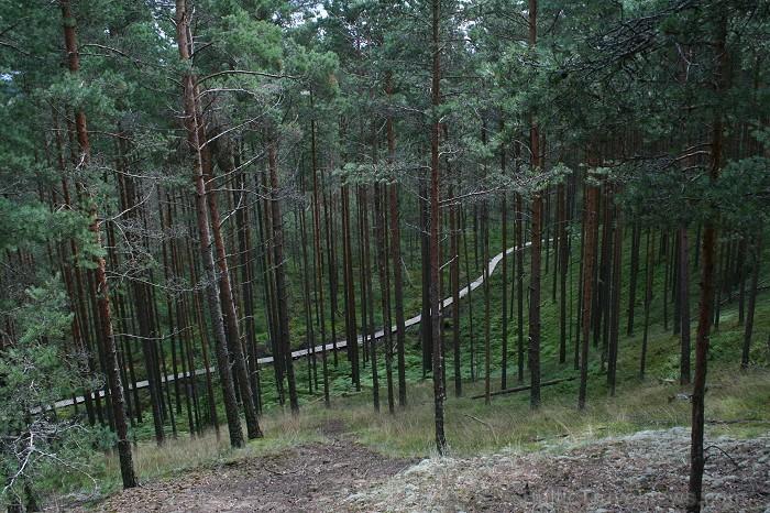 Iepazīsti dabas skaistumu Igaunijas dabas izpētes takā - Rannametsa-Tolkuse. Vairāk www.visitestonia.com