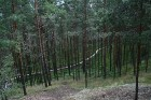 Iepazīsti dabas skaistumu Igaunijas dabas izpētes takā - Rannametsa-Tolkuse. Vairāk www.visitestonia.com 2