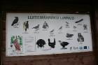Iepazīsti dabas skaistumu Igaunijas dabas izpētes takā - Rannametsa-Tolkuse. Vairāk www.visitestonia.com 4