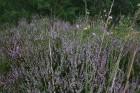 Iepazīsti dabas skaistumu Igaunijas dabas izpētes takā - Rannametsa-Tolkuse. Vairāk www.visitestonia.com 11
