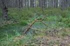 Iepazīsti dabas skaistumu Igaunijas dabas izpētes takā - Rannametsa-Tolkuse. Vairāk www.visitestonia.com 13