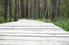 Iepazīsti dabas skaistumu Igaunijas dabas izpētes takā - Rannametsa-Tolkuse. Vairāk www.visitestonia.com 14