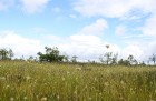 Iepazīsti dabas skaistumu Igaunijas dabas izpētes takā - Rannametsa-Tolkuse. Vairāk www.visitestonia.com 18