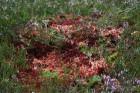 Iepazīsti dabas skaistumu Igaunijas dabas izpētes takā - Rannametsa-Tolkuse. Vairāk www.visitestonia.com 19
