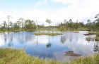 Iepazīsti dabas skaistumu Igaunijas dabas izpētes takā - Rannametsa-Tolkuse. Vairāk www.visitestonia.com 21