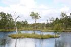 Iepazīsti dabas skaistumu Igaunijas dabas izpētes takā - Rannametsa-Tolkuse. Vairāk www.visitestonia.com 22
