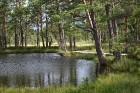 Iepazīsti dabas skaistumu Igaunijas dabas izpētes takā - Rannametsa-Tolkuse. Vairāk www.visitestonia.com 24