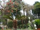 Funšala, Madeiras galvaspilsēta, slavena ar saviem ziediem. Zied mimozas, koraļkoki, kamēlijas, orhidejas, bugenvillijas, tulpju koki, magnolijas... G 2
