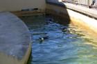 Kuršu kāpa. Jūras muzeja un Delfinārija iemītnieki priecē apmeklētājus www.visitlithuania.net 5