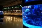 Kuršu kāpa. Jūras muzeja un Delfinārija iemītnieki priecē apmeklētājus www.visitlithuania.net 10
