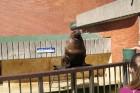 Kuršu kāpa. Jūras muzeja un Delfinārija iemītnieki priecē apmeklētājus www.visitlithuania.net 13