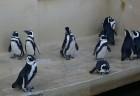 Kuršu kāpa. Jūras muzeja un Delfinārija iemītnieki priecē apmeklētājus www.visitlithuania.net 14