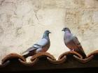 Travelnews.lv atklāj Overņas reģiona noslēpumus tās galvaspilsētā Klermonferānā 11