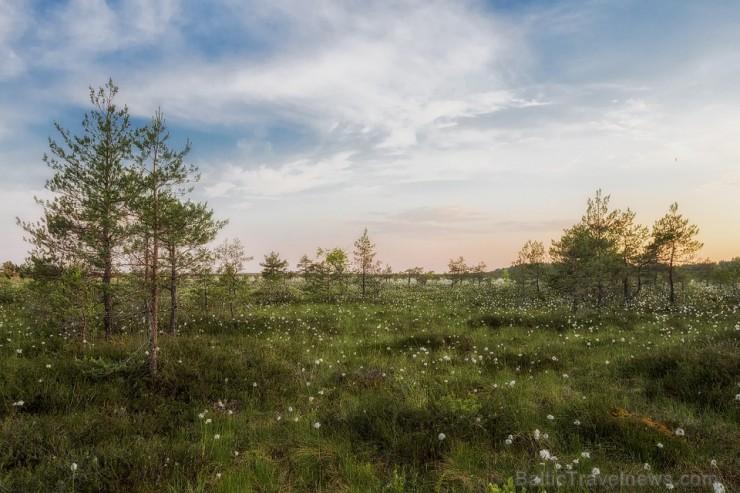 estonia-319626_960_720