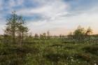 estonia-319626_960_720 10