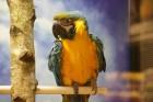 «Dino Zoo Pasaule» atklāšanas svētku laikā aicina aplūkot lielāko akvāriju Latvijā 6