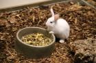 «Dino Zoo Pasaule» atklāšanas svētku laikā aicina aplūkot lielāko akvāriju Latvijā 9