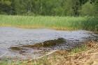 Travelnews.lv apmeklē Sivera ezeru Krāslavas novadā, kur konstatē gandrīz +20 siltu ūdeni 25