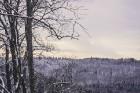 Kā ar maģisku burvju nūjiņas pieskārienu, Sigulda lepni iznes visu gadalaiku tērpus - zeltu, sudrabu, ievziedu mirdzumu un sulīgo vasaras zaļumu 15