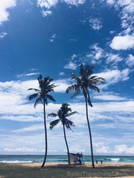 Sibillas ceļojums Šrilankā bija īsts sapnis - viena nedēļa tika pavadīta kalnos, tējas plantācijās un rezervātos, cerībā sastapt ziloni brīvā dabā, be