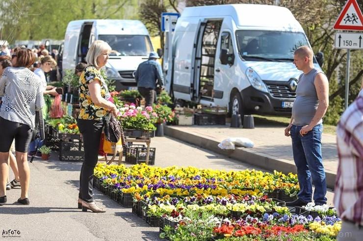 Stādu tirgus Madonas pilsētas centrālajā laukumā jau ir kļuvis par jauku tradīciju un īstu pamudinājumu uzsākt praktiskus pavasara darbus piemājas dār