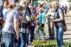 Stādu tirgus Madonas pilsētas centrālajā laukumā jau ir kļuvis par jauku tradīciju un īstu pamudinājumu uzsākt praktiskus pavasara darbus piemājas dār 2