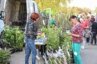 Stādu tirgus Madonas pilsētas centrālajā laukumā jau ir kļuvis par jauku tradīciju un īstu pamudinājumu uzsākt praktiskus pavasara darbus piemājas dār 3