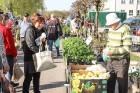 Stādu tirgus Madonas pilsētas centrālajā laukumā jau ir kļuvis par jauku tradīciju un īstu pamudinājumu uzsākt praktiskus pavasara darbus piemājas dār 4