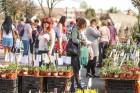 Stādu tirgus Madonas pilsētas centrālajā laukumā jau ir kļuvis par jauku tradīciju un īstu pamudinājumu uzsākt praktiskus pavasara darbus piemājas dār 7