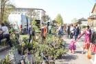 Stādu tirgus Madonas pilsētas centrālajā laukumā jau ir kļuvis par jauku tradīciju un īstu pamudinājumu uzsākt praktiskus pavasara darbus piemājas dār 9