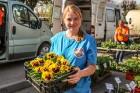 Stādu tirgus Madonas pilsētas centrālajā laukumā jau ir kļuvis par jauku tradīciju un īstu pamudinājumu uzsākt praktiskus pavasara darbus piemājas dār 11