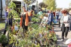 Stādu tirgus Madonas pilsētas centrālajā laukumā jau ir kļuvis par jauku tradīciju un īstu pamudinājumu uzsākt praktiskus pavasara darbus piemājas dār 17
