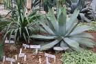 Travelnews.lv apmeklē Nacionālo botānisko dārzu Salaspilī 4