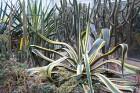 Travelnews.lv apmeklē Nacionālo botānisko dārzu Salaspilī 7