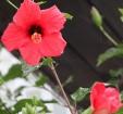 Travelnews.lv apmeklē Nacionālo botānisko dārzu Salaspilī 17