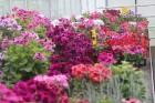Travelnews.lv apmeklē Nacionālo botānisko dārzu Salaspilī 20