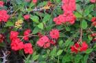 Travelnews.lv apmeklē Nacionālo botānisko dārzu Salaspilī 22