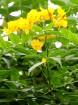 Travelnews.lv apmeklē Nacionālo botānisko dārzu Salaspilī 25