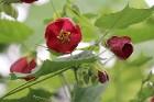 Travelnews.lv apmeklē Nacionālo botānisko dārzu Salaspilī 26