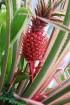 Travelnews.lv apmeklē Nacionālo botānisko dārzu Salaspilī 29