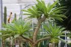Travelnews.lv apmeklē Nacionālo botānisko dārzu Salaspilī 40