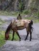 Travelnews.lv apmeklē Mutso ciemu Kaukāza kalnos un iepazīst viduslaiku cietoksni.  Atbalsta: Georgia.Travel 73