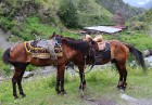 Travelnews.lv apmeklē Mutso ciemu Kaukāza kalnos un iepazīst viduslaiku cietoksni.  Atbalsta: Georgia.Travel 74