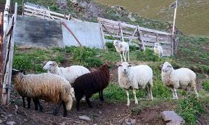 Travelnews.lv ar apvidus spēkratu «UAZ» dodas Kaukāza kalnu bezceļos. Atbalsta: Magtur 12