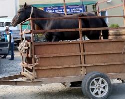 Travelnews.lv piefiksē dažus fotomirkļus Karačajevskas pilsētā, kas atrodas Ziemeļkaukāzā. Atbalsta: Magtur 23