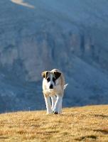 Travelnews.lv rīta agrumā apjūsmo Eiropas augstāko virsotni Elbruss. Atbalsta: Magtur 39