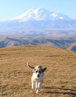 Travelnews.lv rīta agrumā apjūsmo Eiropas augstāko virsotni Elbruss. Atbalsta: Magtur 40