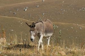 Travelnews.lv ar auto apceļo Kabarda-Balkārijas republiku Krievijā. Atbalsta: Magtur 49